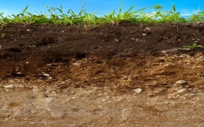 Four Fun Facts About Topsoil
