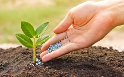 Why Nutrients in Soil are Important