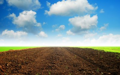 The Difference Between Mineral and Organic Soils