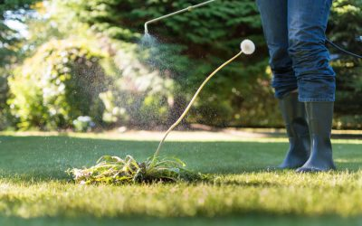 Weed Management: Before You Plant