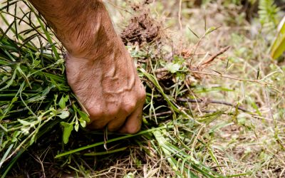 Weed Management: After You Plant