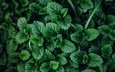 Nine Plants to Get Rid of Pests