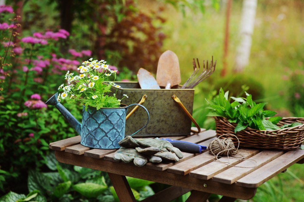 Five Summer Gardening Tips
