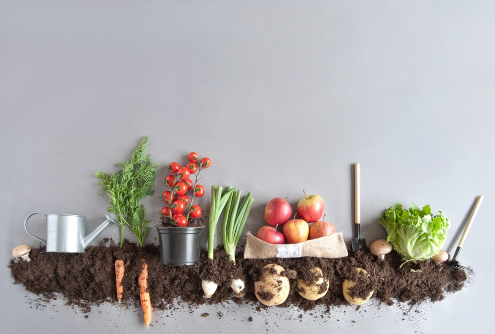 Composting 101 for Beginners
