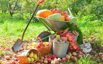6 Vegetables to Plant in the Fall