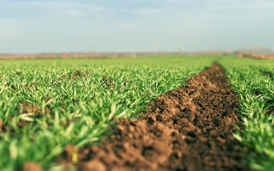 5 Ways to Add Nutrients to Soil