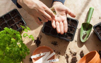 Indoor Gardening 101