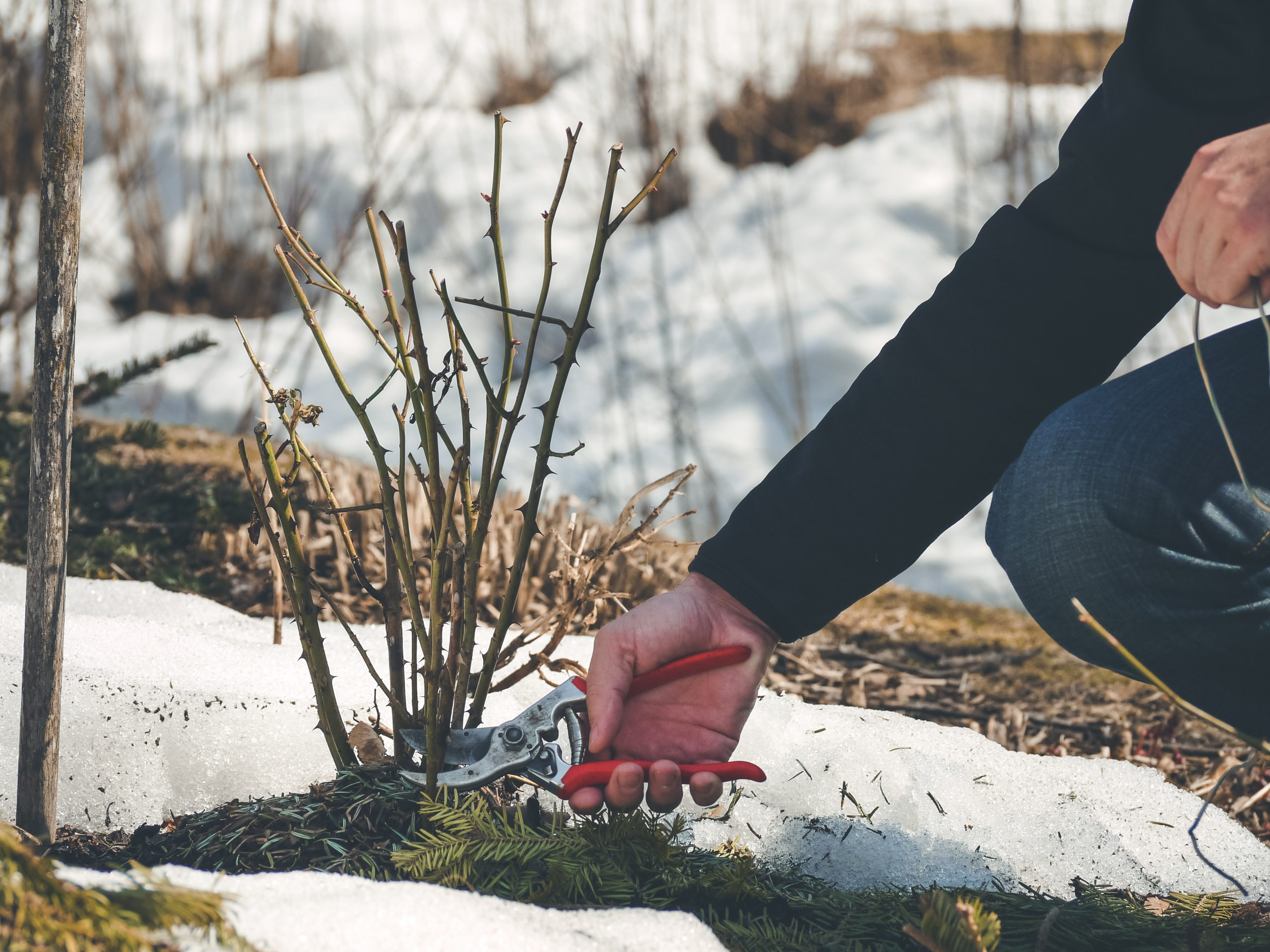 4 Vegetables to Grow in the Winter